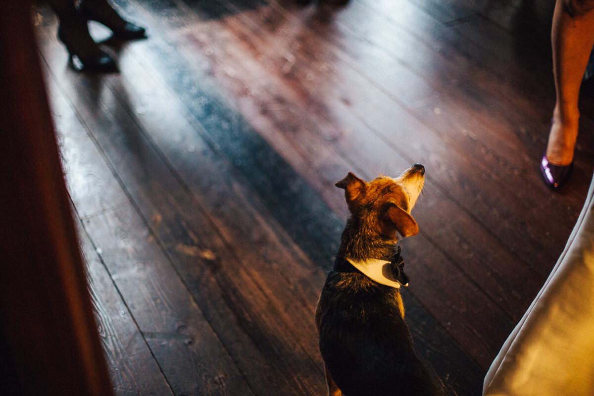Dog wearing a bow tie at the wedding