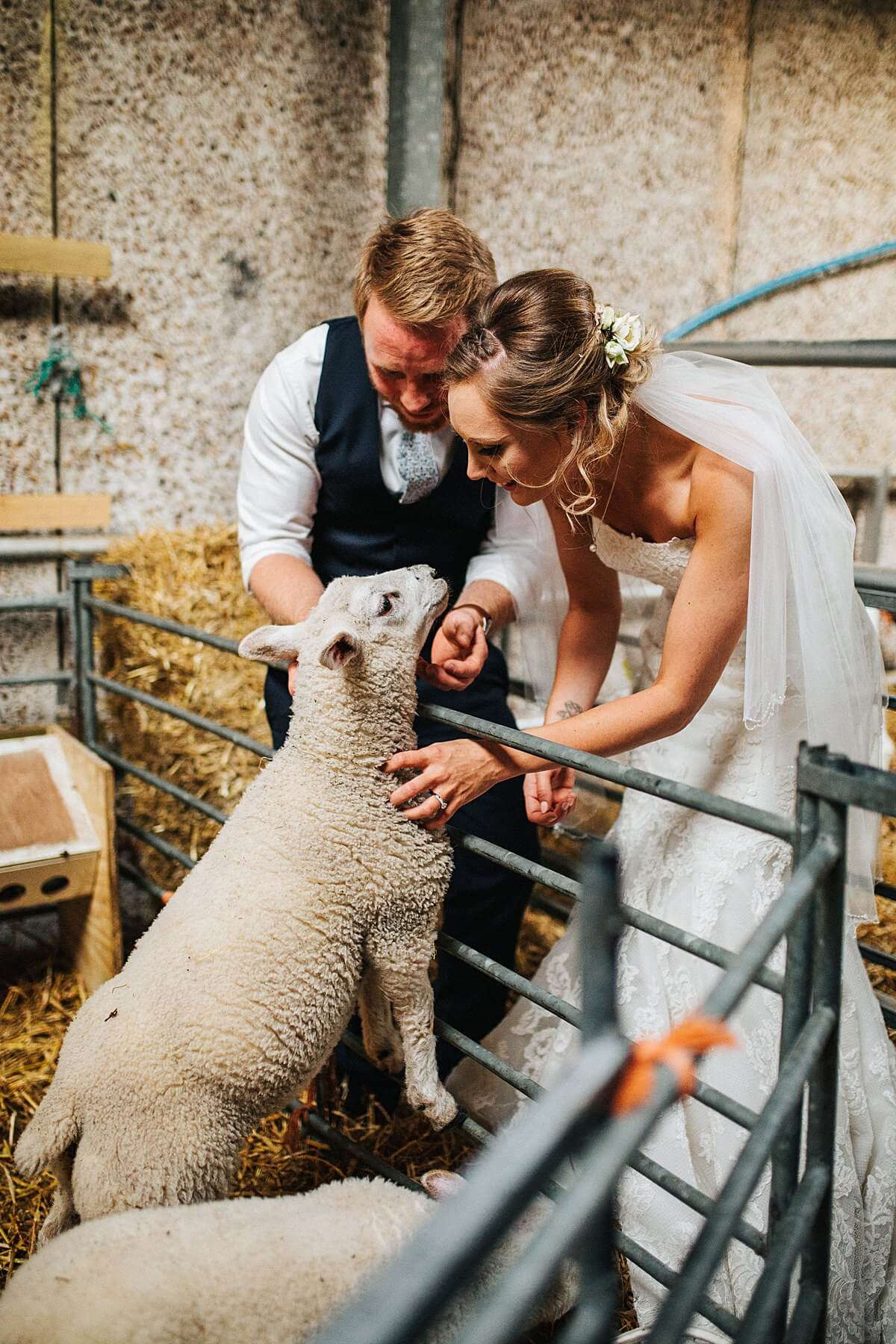 Bride and groom petting the lambs